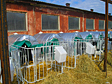 Утепленный домик для телят